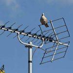 Cara Mencari Siaran TV Antena Biasa yang Hilang 100 Work